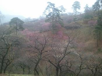 yosinobaien.jpg